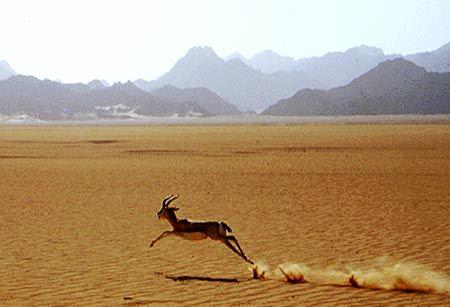De la Start-up à la gazelle : quelles stratégies de pilotage ?