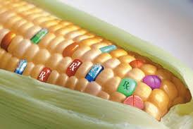 Quelle agriculture pour la France avec l'arrivée des OGM ?