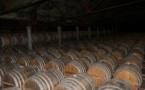 Les professionnels du cognac optent pour la prudence pour leurs prochaines cultures